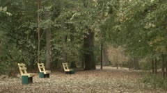 Row of Benches in the Alley Between the Trees in the National Reserve Stock Footage