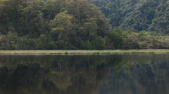 Rainforest tree and gordon river in tasmania Stock Footage
