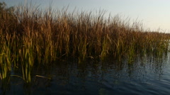 View over river from  the boat  in Danube Delta reservation Stock Footage