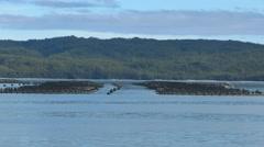 Atlantic salmon pens in macquarie harbour, tasmania Stock Footage
