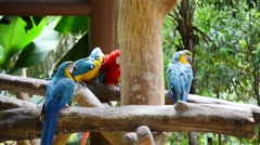 Colourful parrots in the zoo Stock Footage