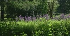 Magnificent garden. Petergof Stock Footage
