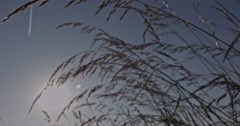 A slow motion shot through blades of grass on a meadow with the sun in the backg Stock Footage