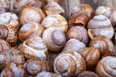 brown spiral shells on a wooden board decorative photo - stock photo
