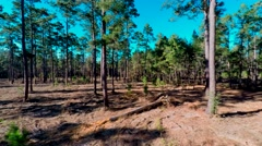 A panning shot of the forest floor and its abounding trees. - stock footage