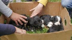 Children cuddling five newborn cute black puppies in cardboard box by Pakito. Stock Footage