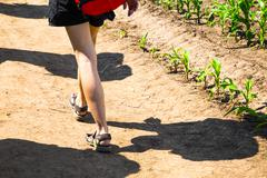 Shadow and legs of a woman walking near corn plants - stock photo