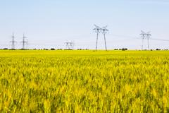 Field of ripening wheat with electricity pylons - stock photo