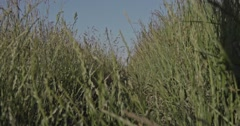 A path through a grassy herbal meadow at the countryside with high grass plants. - stock footage