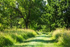 Grassy farm track through leafy green woodland Stock Photos