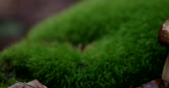 Forest With Growing Mushrooms and Green Moss. Slider Shot Stock Footage