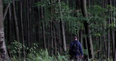 Man Picking Mushrooms in the Forest Stock Footage