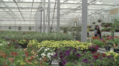A plantation of flowers in Glasshouse Stock Footage