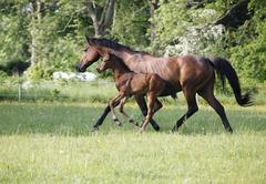 Mare with foal on pasture Stock Photos