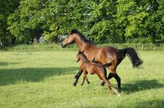 brown mare with foal - stock photo