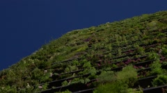 Highest vertical garden living wall in the world, Sydney - pan facade Stock Footage