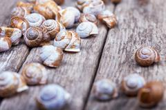 spiral shells on a wooden grunge board decorative photo - stock photo