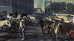 Canada 1975: people watching sightseeing carriage tour Stock Footage