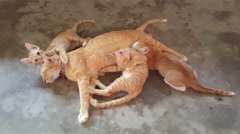 A cat with kittens Arkistovideo