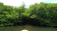 Tourist boat passes by the narrow passage in the mangrove forest. Stock Footage