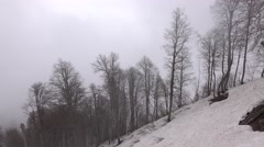 Several naked trees at snowy mountain slope, aerial view, misty weather Stock Footage