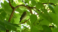Little Bird in The Forest Stock Footage
