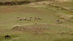 PERU: shepherdess with child and Sheep flock in Andes Stock Footage