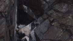 Close up of Gyre Falcon on nest in cliff crevice Stock Footage