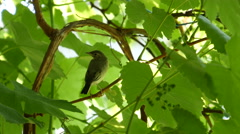 Little Bird in The Forest - stock footage