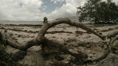 Driftwood Time Lapse Stock Footage