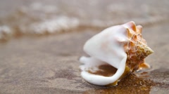 Seashell on sand beach in the light of sun with waves backround - stock footage
