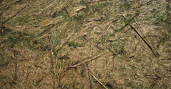 Cut grass floating on lake surface cropped view for motion backgrounds Stock Footage