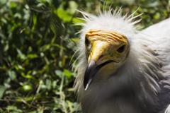Dangerous wild bird in a zoo Stock Photos