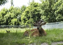 Group deer in a zoo Stock Photos