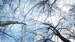 Gliding Under Trees In Snowfall Stock Footage