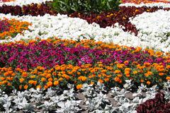 Flowerbed with flowers Stock Photos