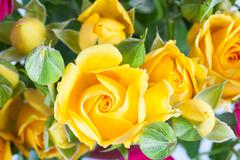 yellow rose spray flower with rosebuds close up - stock photo