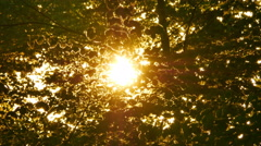 Early morning sun comes up through apple trees at sunrise - stock footage