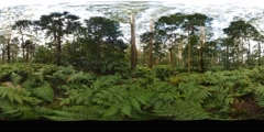 360VR Green ferns of rainforest VR with nature audio sounds Stock Footage
