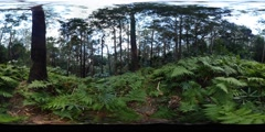 360VR Tall trees of the rainforest virtual reality 360 degrees Stock Footage