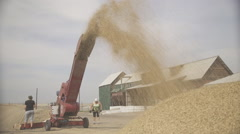 Drying grain using scraper loader and two workers outdoors Stock Footage
