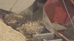 Scraper loader quickly shoveling grain closeup - stock footage