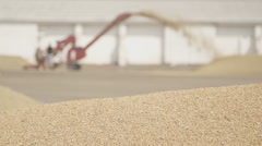 Grain drying in open air with help of a scraper loader and people - stock footage