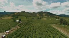 4K Aerial View: Revealing Orchard/Vineyard & Hillside Stock Footage