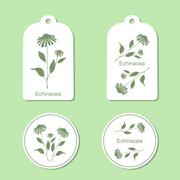 Echinacea leaves and flowers - stock illustration