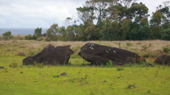Broken Moai statue laying on the ground Stock Footage