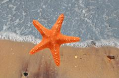 Beautiful star-fish on sand beach and tropical turquoise blue sea. View from - stock photo