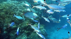 Quantities of marine and coral fish - Red sea Stock Footage