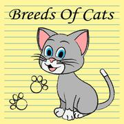 Breeds Of Cats Representing Mating Offspring And Reproduce - stock illustration