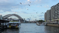 Seagulls at the pier of Sydney Stock Footage